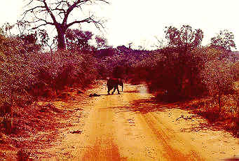 Baby Elephant crossing our path.